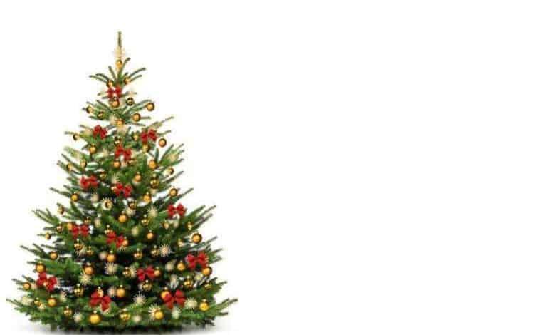 Christmas Hampers
