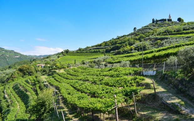 You are currently viewing Valpolicella Wines Grow In 2021