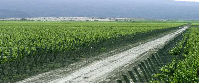 Bodegas-Callia-Argentina-landscape-andes-mountains